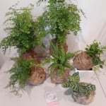 kokedama Indoor Plants