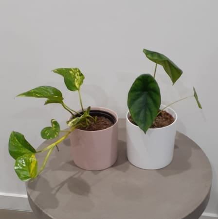Plant In Ceramic Pot